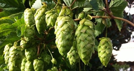La Cerveza Artesanal y sus Beneficios para la Salud